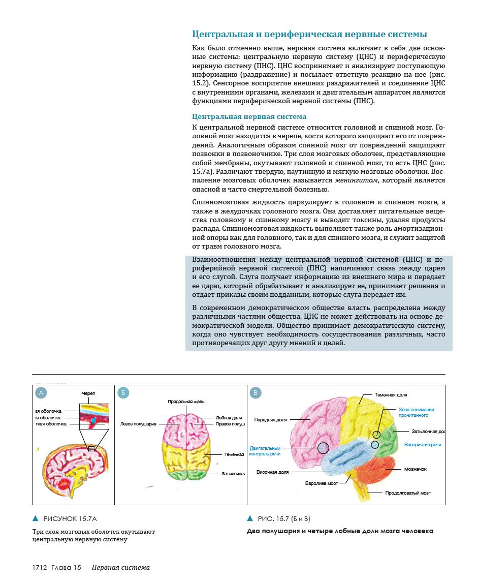 nervnaya-sistema